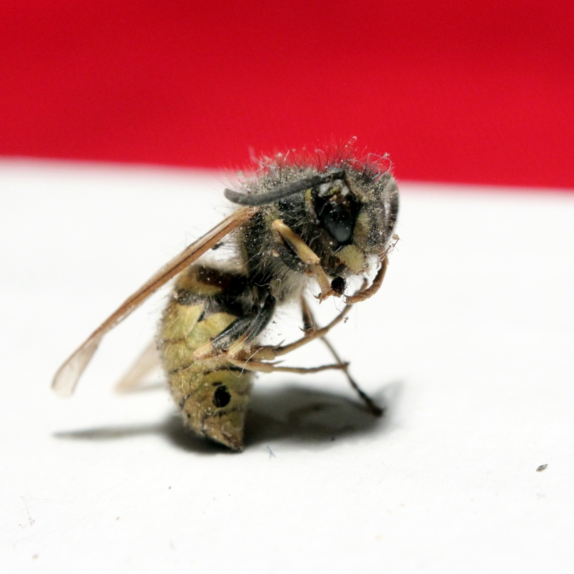 """Wasp - this one adopted this stranger pose when I dumped him out of the box. I made me think of Rodin's """"Thinker""""..."""
