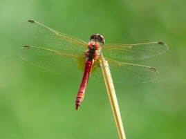 dragonfly-177338_1280