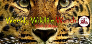 Weekly Wildlife Watch Logo