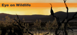 Eye On Wildlife Logo