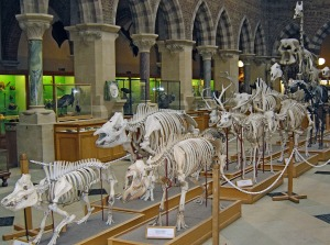 skeletons-268954_1280
